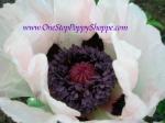 Oriental Poppy 'Louve'
